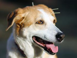 kenosha pet acupuncture, kenosha veterinary services, dog acupuncture kenosha