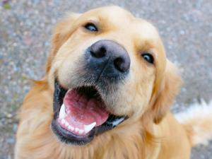 kenosha pet dentist, veterinary dentist kenosha, pet tooth care kenosha