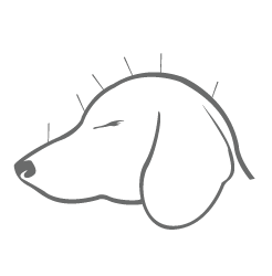 kenosha pet acupuncture, animal acupuncture, dog acupuncture kenosha