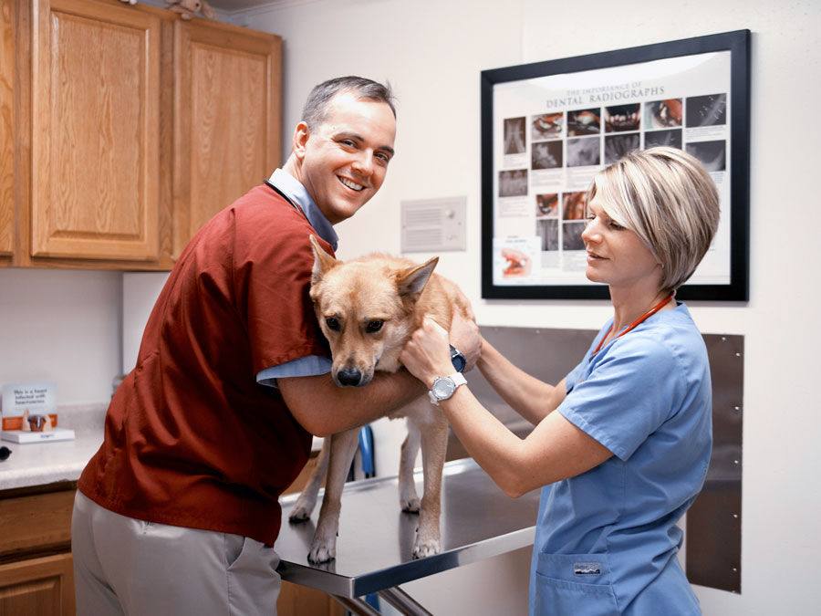 Veterinary Clinic In Kenosha, kenosha Vet Clinic, Veterinarians in Kenosha