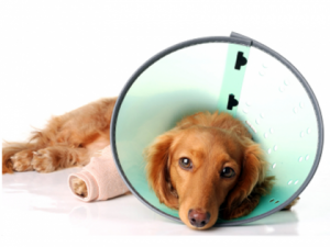 kenosha pet surgery, veterinary surgery kenosha, kenosha veterinary surgeons