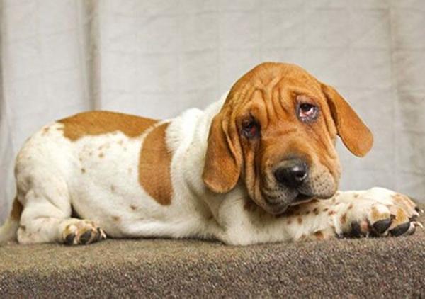 prairie side veterinary hospital, breed information, sharp asset dog breed information
