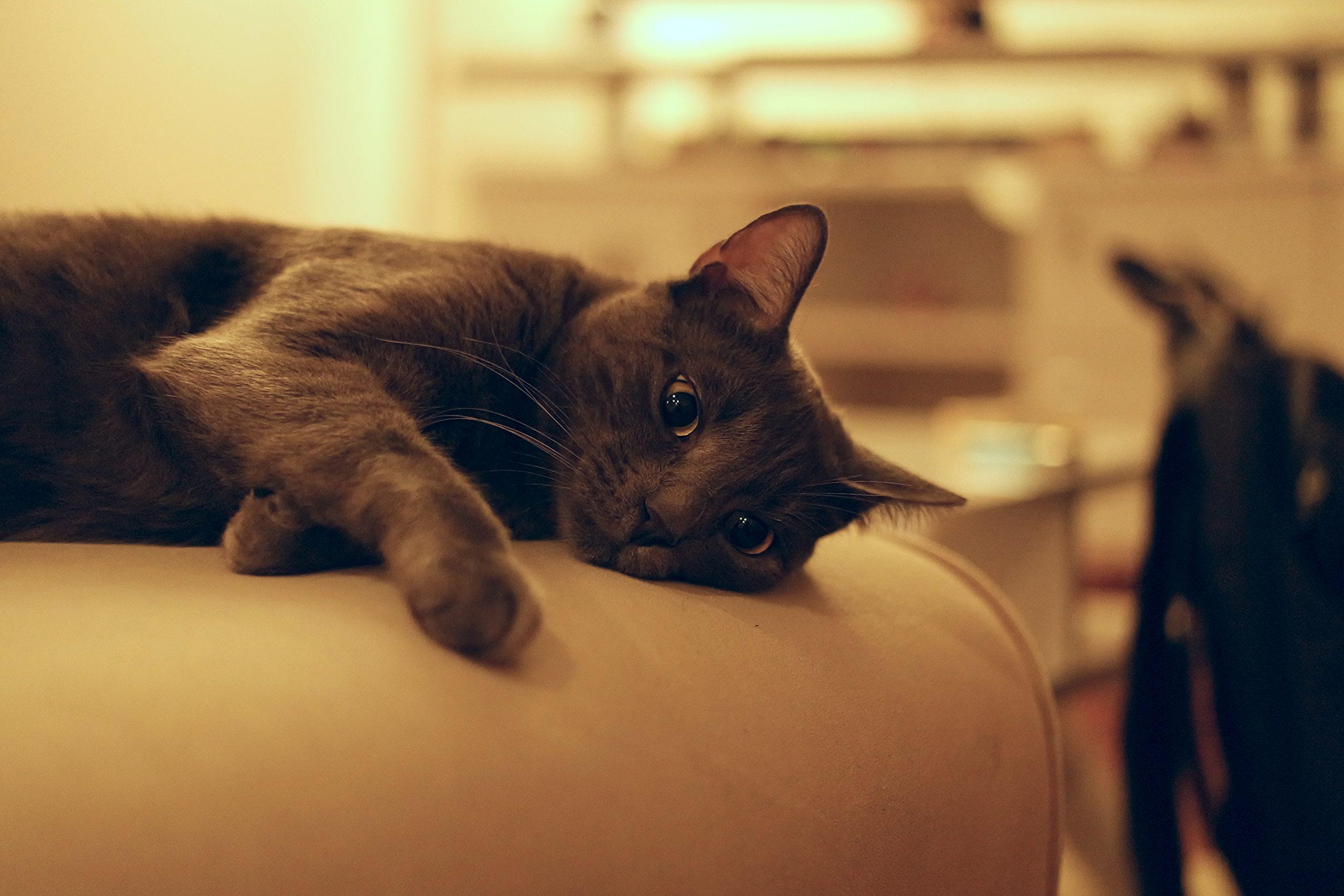 spaying in kenosha, spay cat kenosha, spay dog kenosha