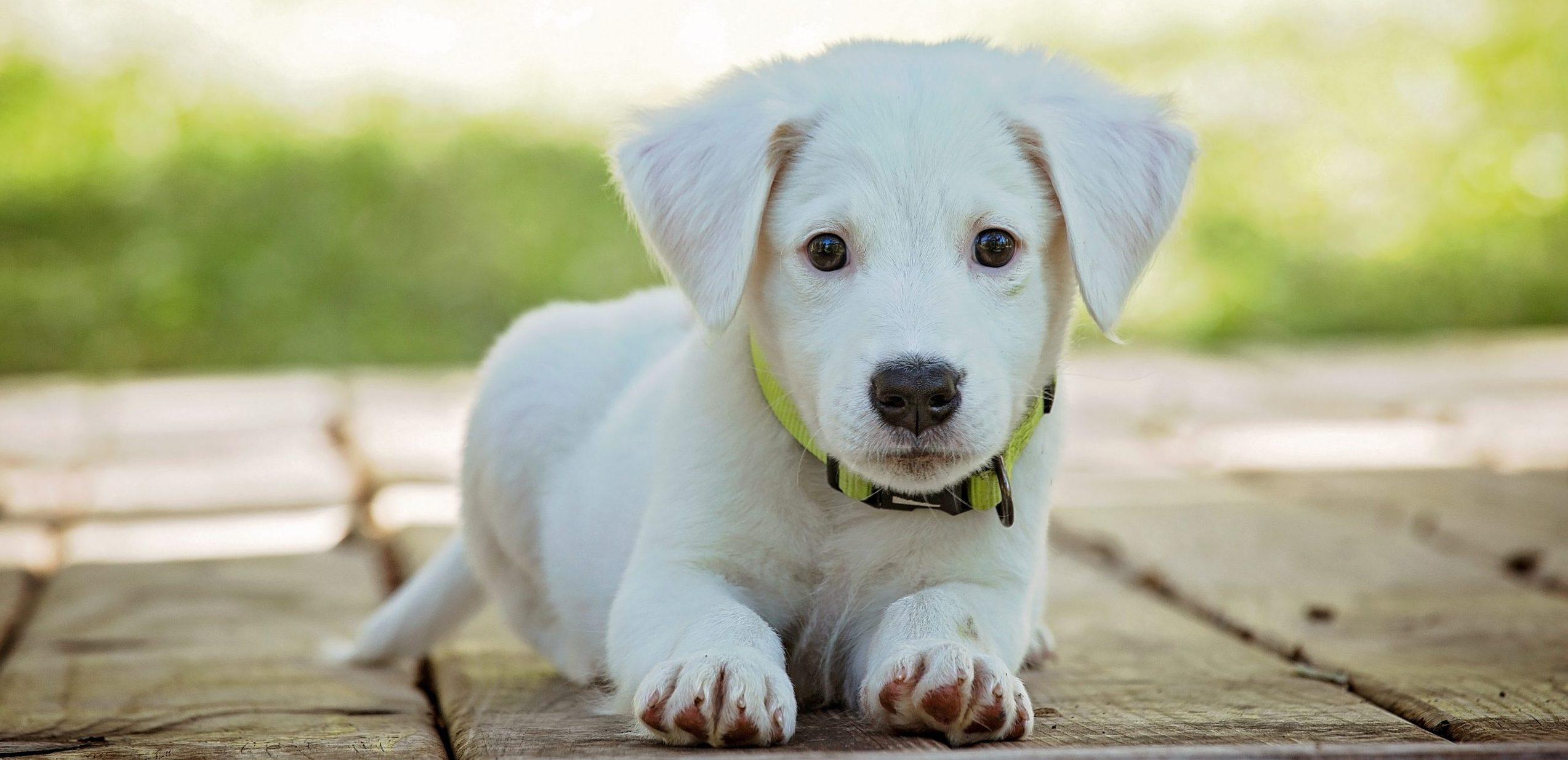 puppy wellness kenosha, puppy veterinarian kenosha, puppy animal hospital kenosha