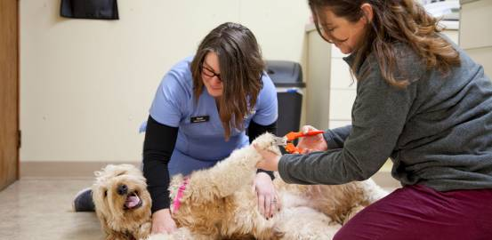 Veterinary Clinic in Somers, prairie side vet, pet vet clinics in somers